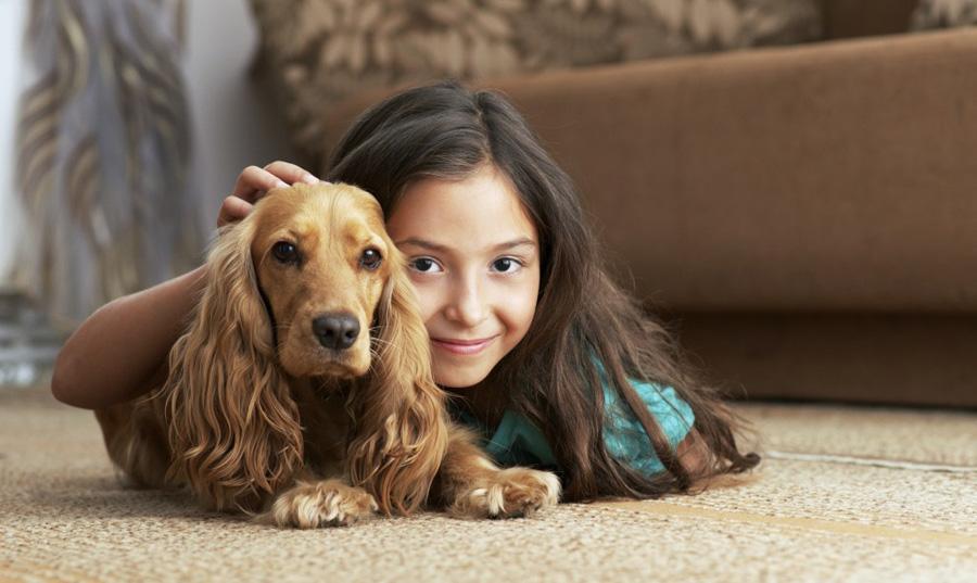 chọn nội thất cho gia đình nuôi thú cưng
